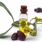 Jojoba (Simmondsia chinensis) oil, leaves, flower and seeds
