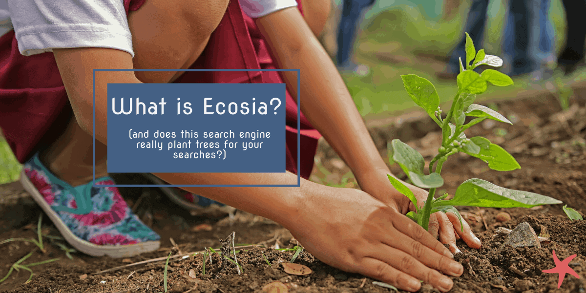 What is Ecosia (and does this search engine really plant trees?)