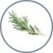 Rosemary - Mint - Vanilla
