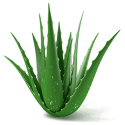 Aloe is our main natural ingredient.