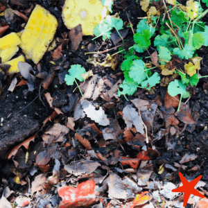 Try composting