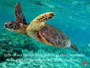 50% of turtle have single use plastic in their stomachs